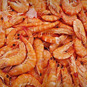 45th-annual-national-shrimp-festival-gallery